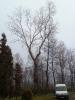 23.01.2020 - wycinka drzewa