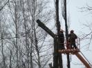 07.02.2013 - usuwanie topól przez pracowników Zieleni Miejskiej