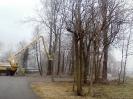 wycinanie drzew_1
