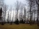 wycinanie drzew_2