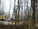 wycinanie drzew_3