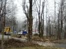 wycinanie drzew_4