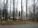wycinanie drzew_5