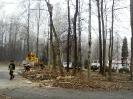 wycinanie drzew_6