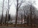 wycinanie drzew_7