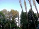 27-30.09.2011 - wycinanie 27 topól wokół kościoła