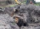 28.10-04.11.2011 - usuwanie korzeni po wyciętych topolach