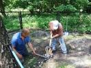 18-29.05.2012 - usuwanie korzeni po wyciętych topolach